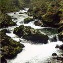 Tumbling waterfall over moss covered rocks