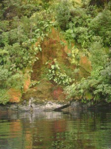 Sphagnum moss in Fjordland