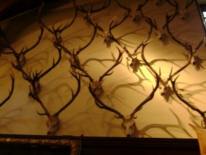 Antlers on the Ballroom Wall, Blair Castle