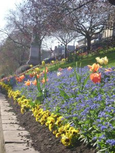 Flowers in Princes St. Gardens, Edinburgh