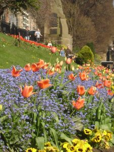 Bluebells & Tulips in Princes St. Gardens