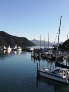 Picton Harbour in the morning sunshine